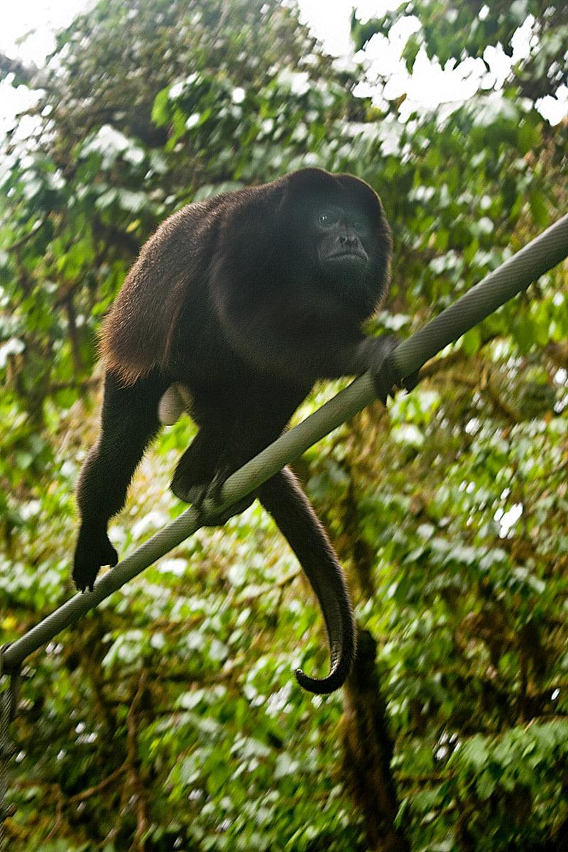 Costa Rica - Canopy Sky Walk tour in Monteverde © David Granda