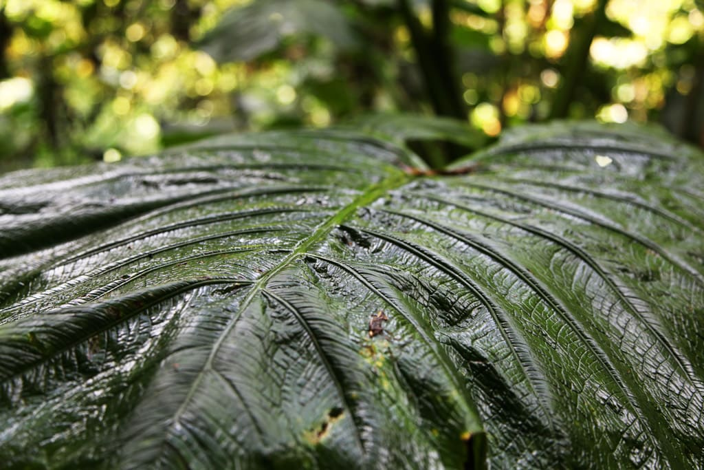 Costa Rica - Canopy Sky Walk tour in Monteverde
