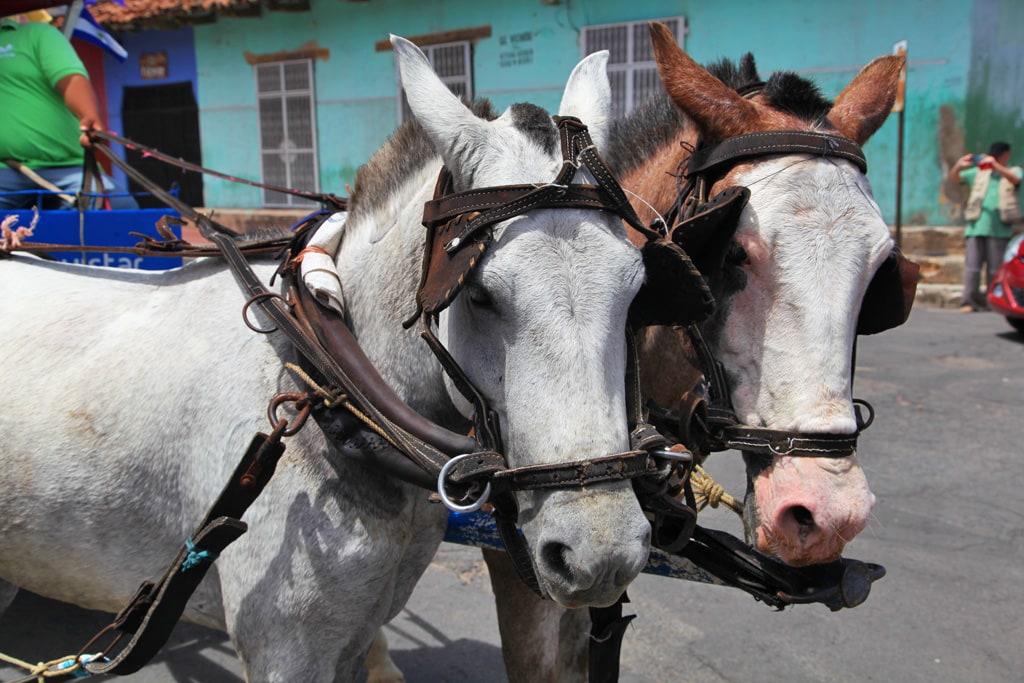 Met paard en wagen door de straten van Granada (Nicaragua)