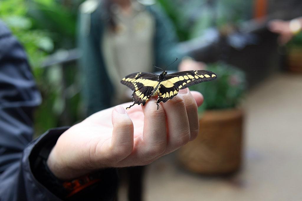 Vlinders in de botanische tuinen van de La Paz Waterfall Gardens