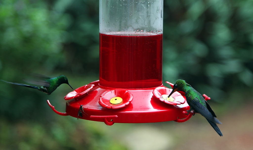 Kolibries in Costa Rica