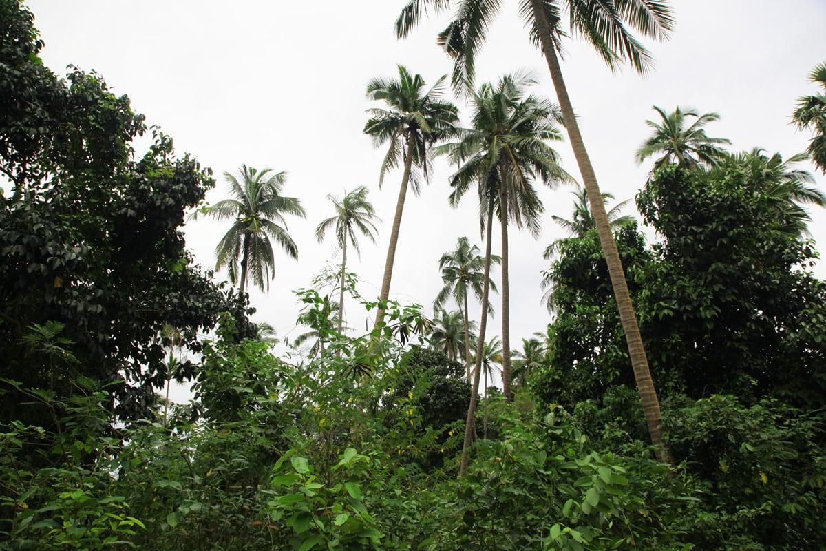 Wuivende palmbomen op Koh Talu Island in Thailand