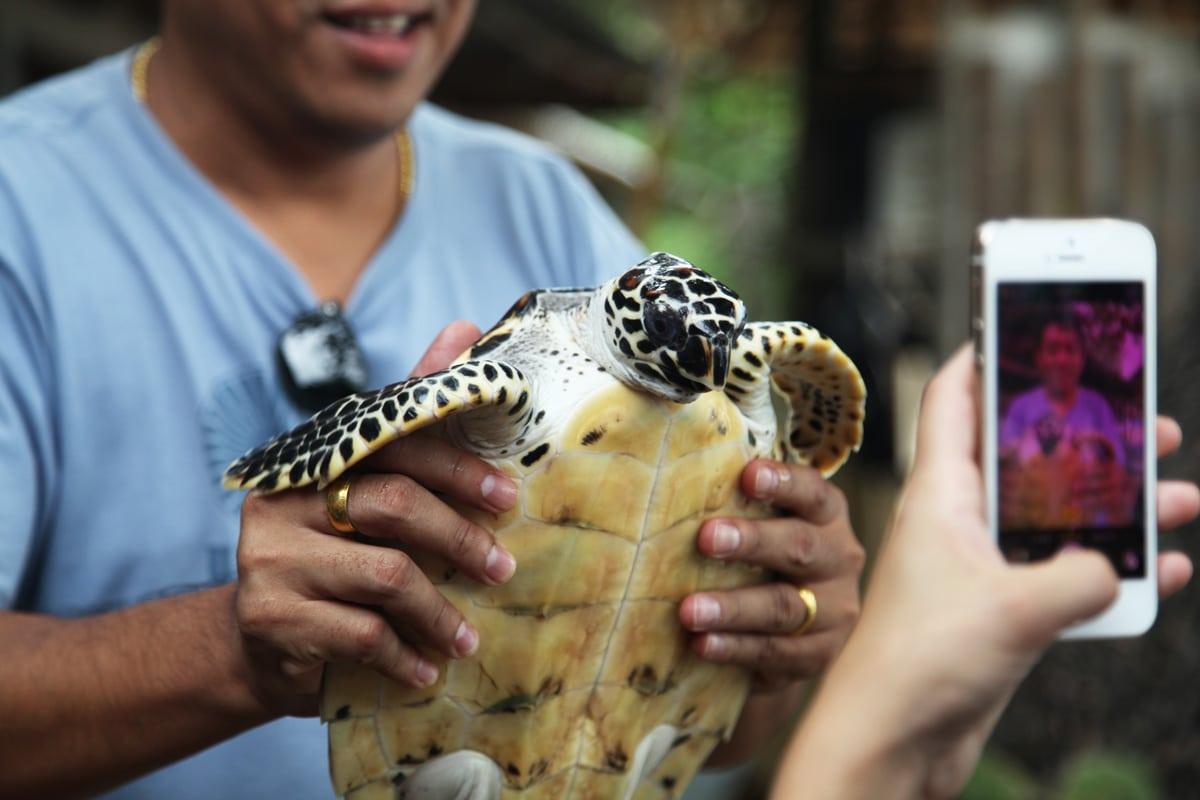 Schildpad in Koh Talu