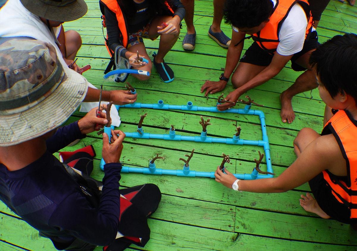 Stekjes koraal planten bij Koh Talu in Thailand