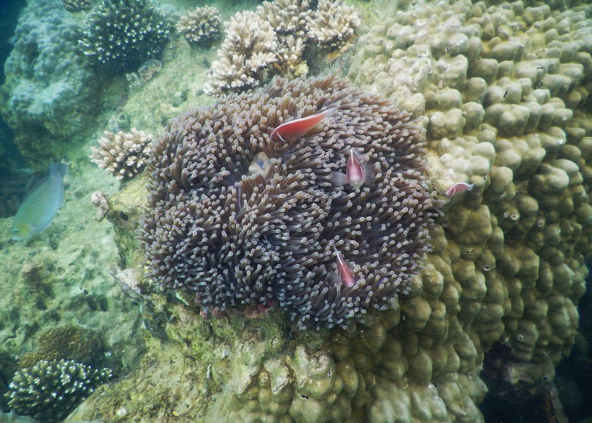 De prachtige koraalriffen van Koh Talu in Thailand