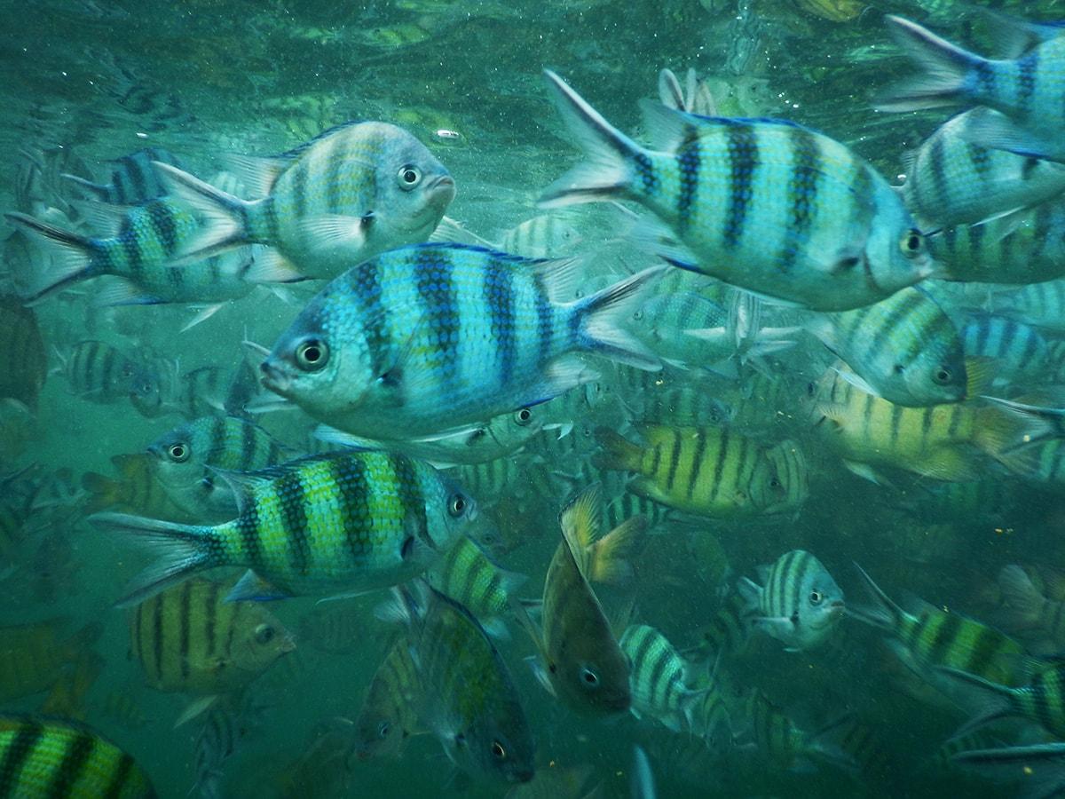 Vissen in de zee bij het eiland Koh Talu in Thailand