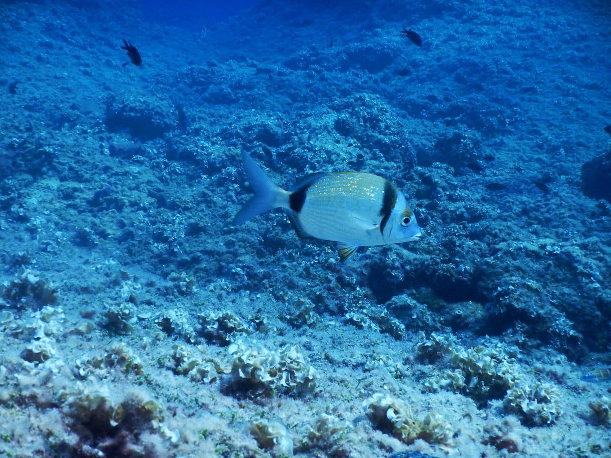 Onderwaterwereld van Benidorm