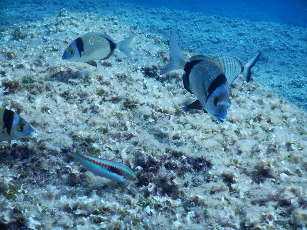 snorkelen en duiken in mauritius