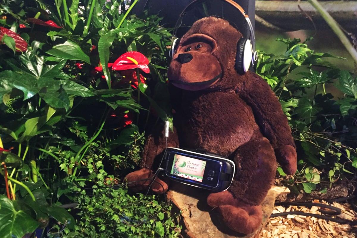 matoke-tours-gorilla