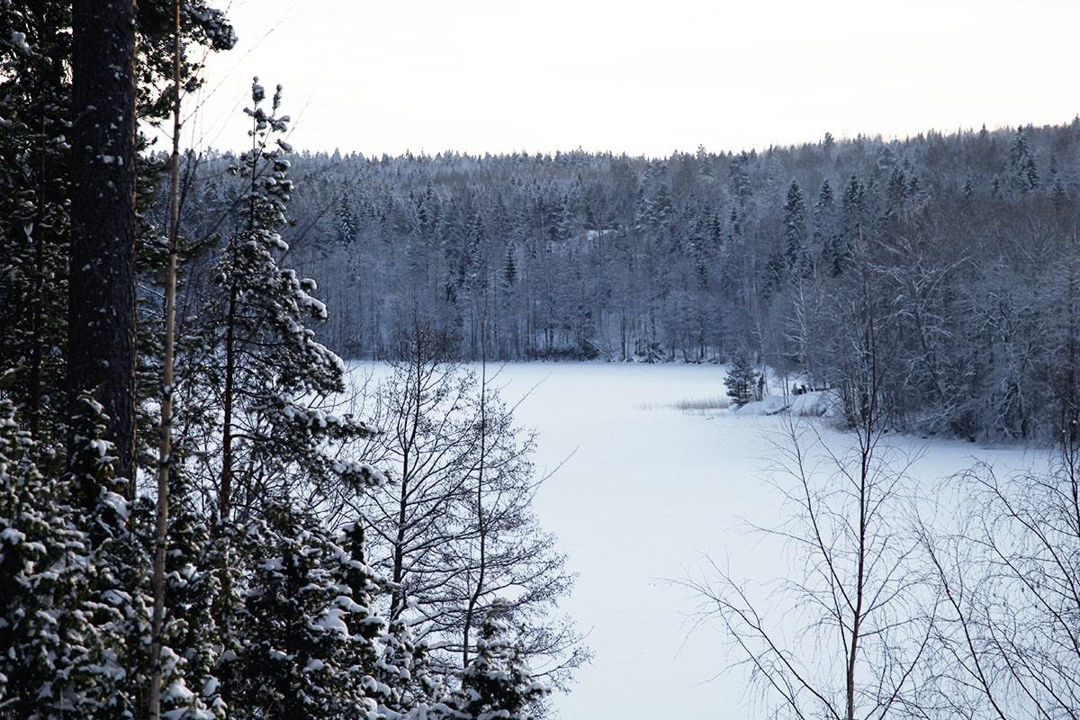 finland-bossen