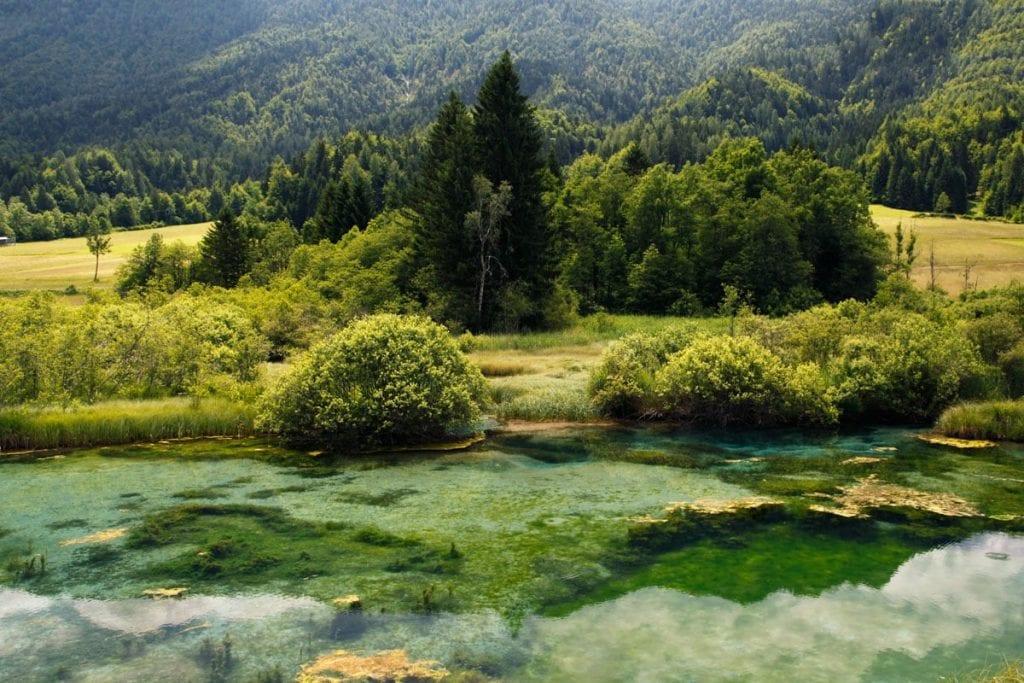 Zelenci bron in Slovenië