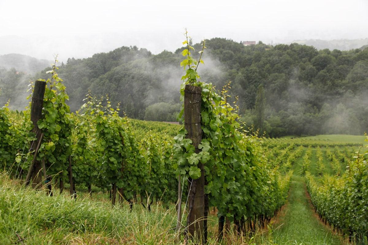 wijnvelden-slovenie