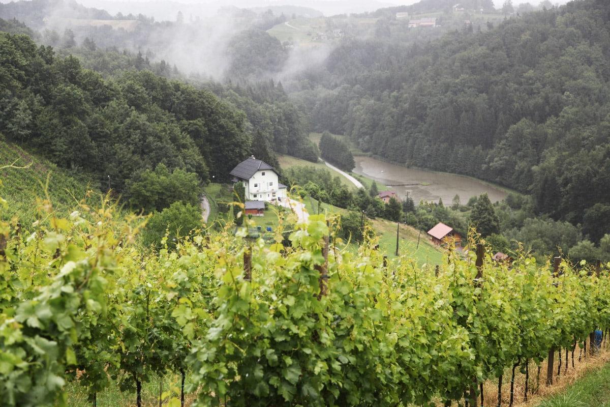 wine-maribor