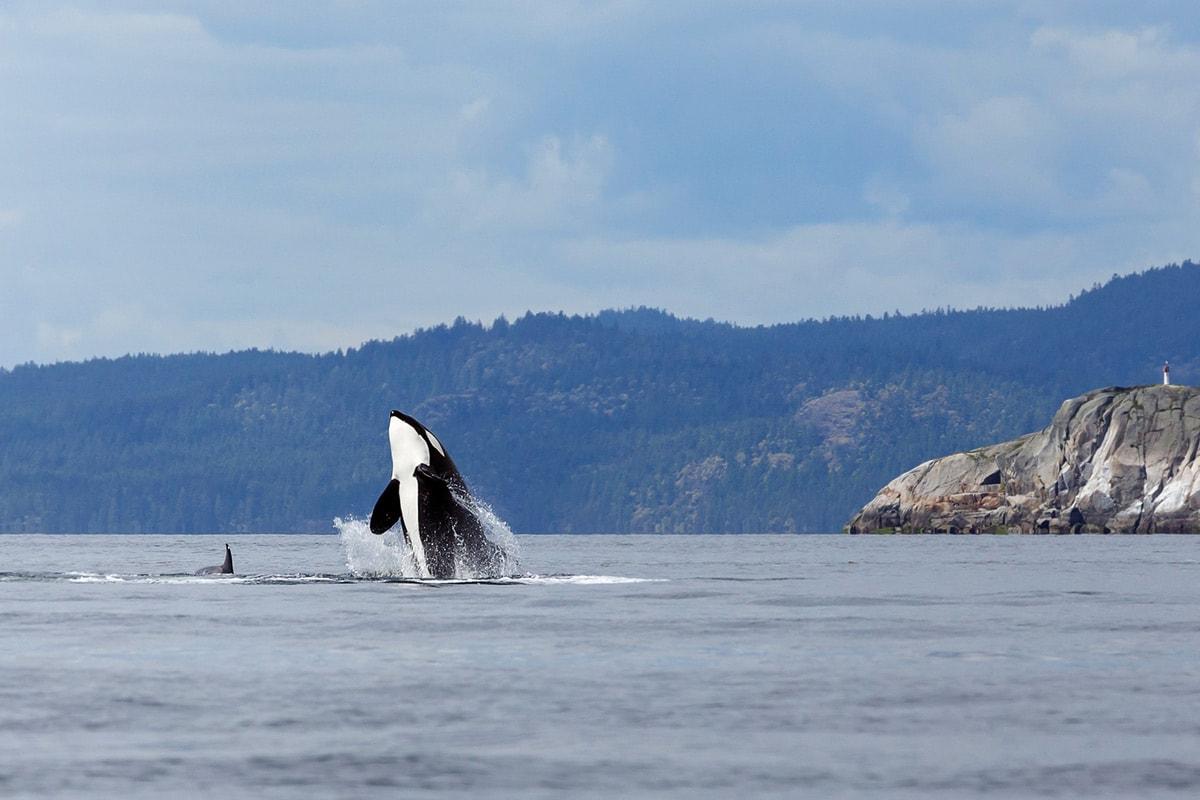 orka-canada