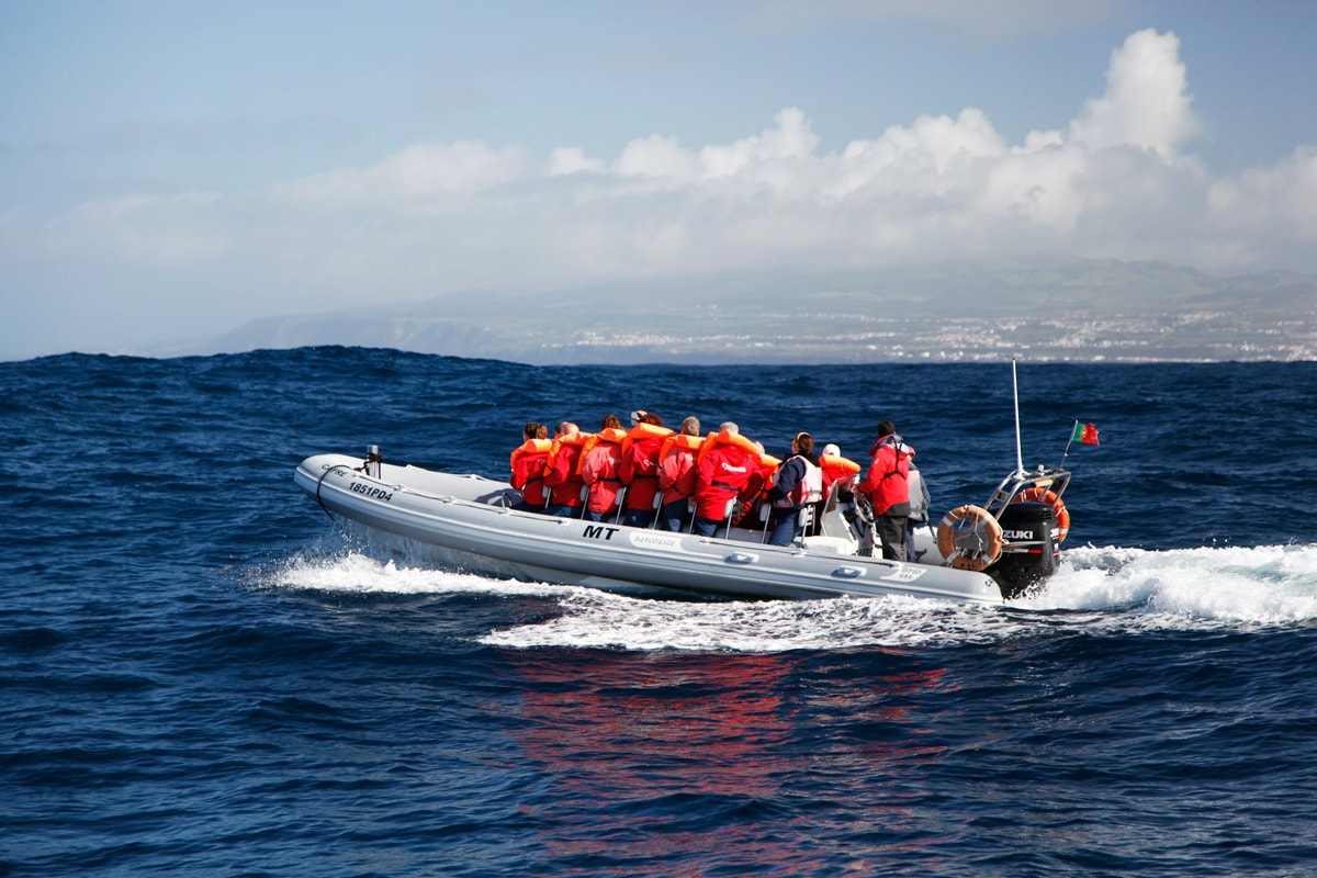 azoren-zee-walvis-excursie