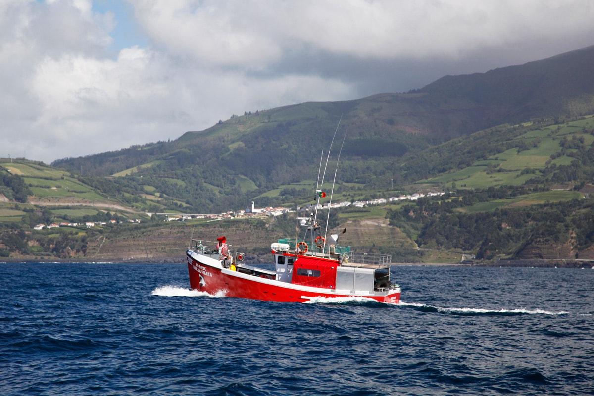 azoren walvissen spotten