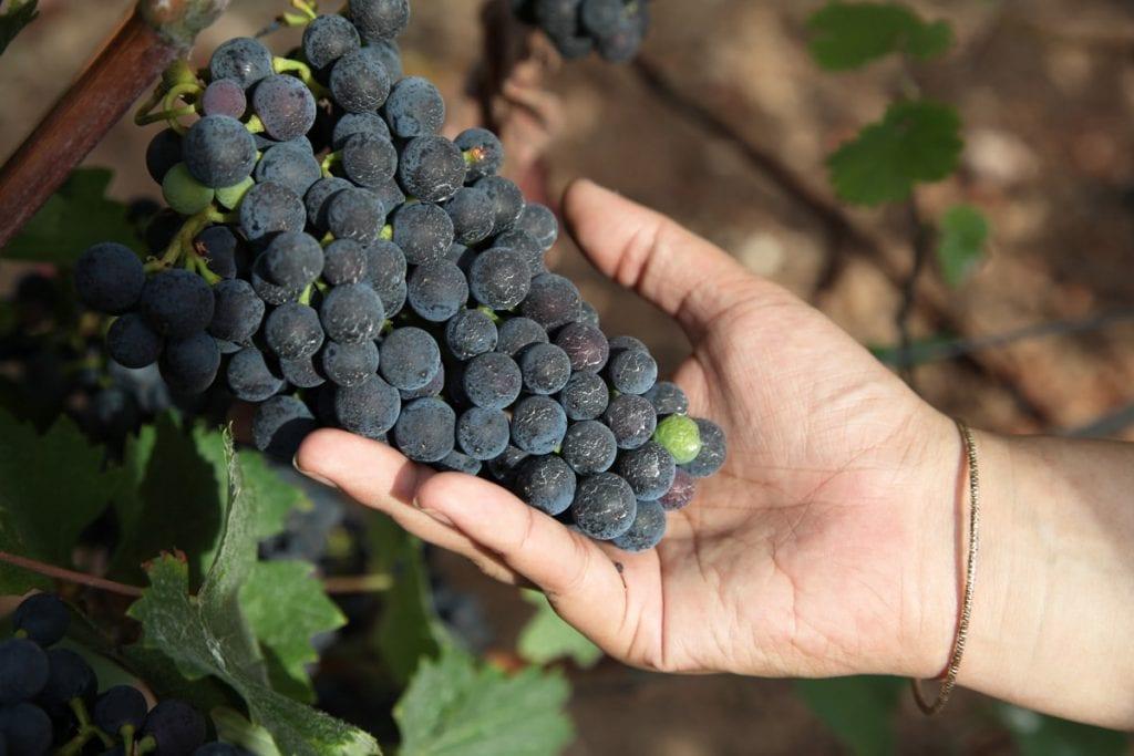 Moezel wijngebied in Duitsland