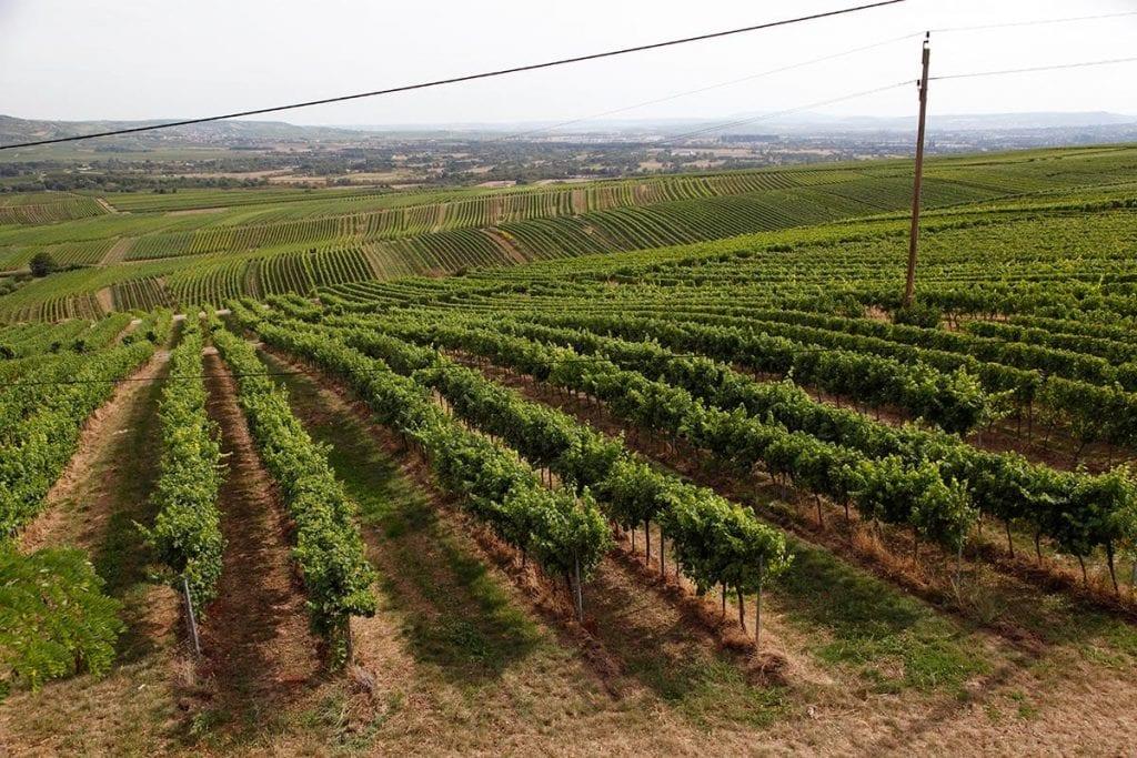 Rheinhessen wijngebied in Duitsland