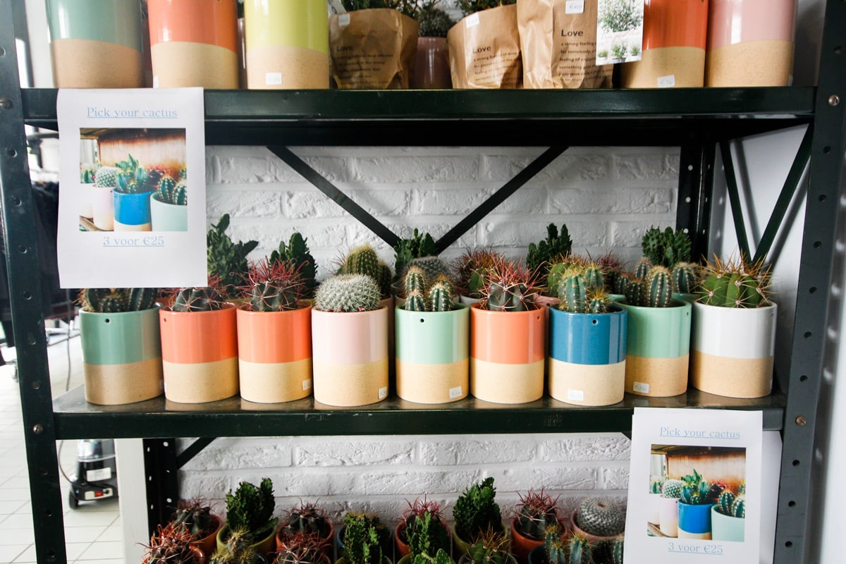'Pick your cactus' bij Local Store 2000