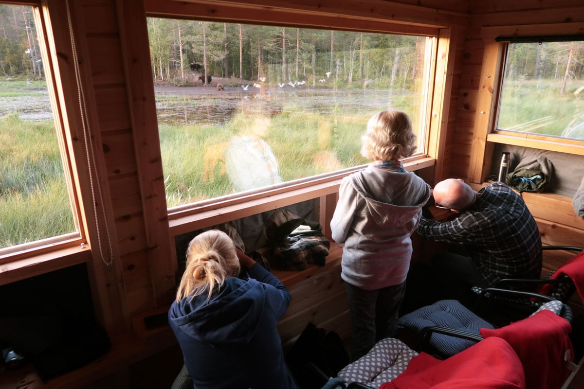 Wilde beren fotograferen in Finland