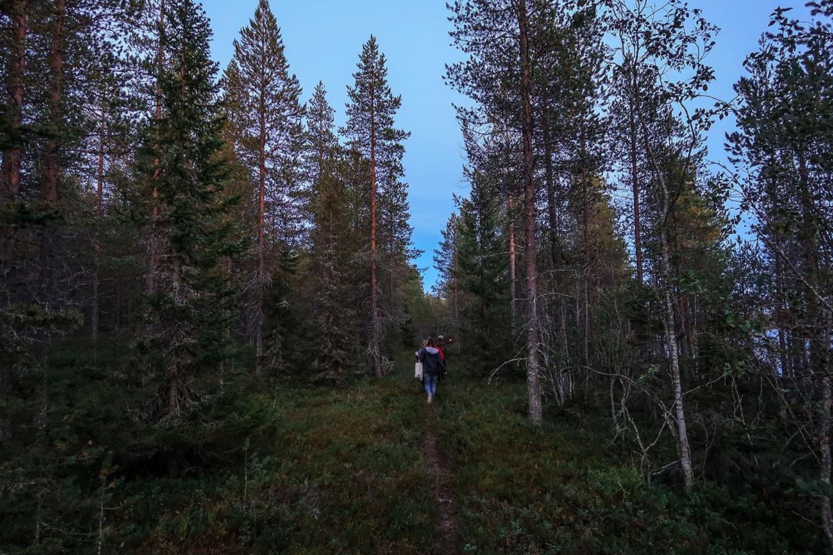 Bossen van Posio in Fins-Lapland