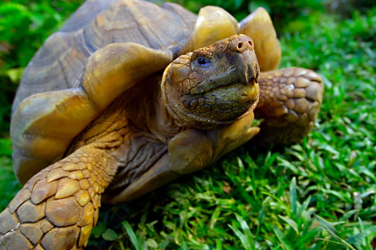 Galapagos eilanden schildpadden