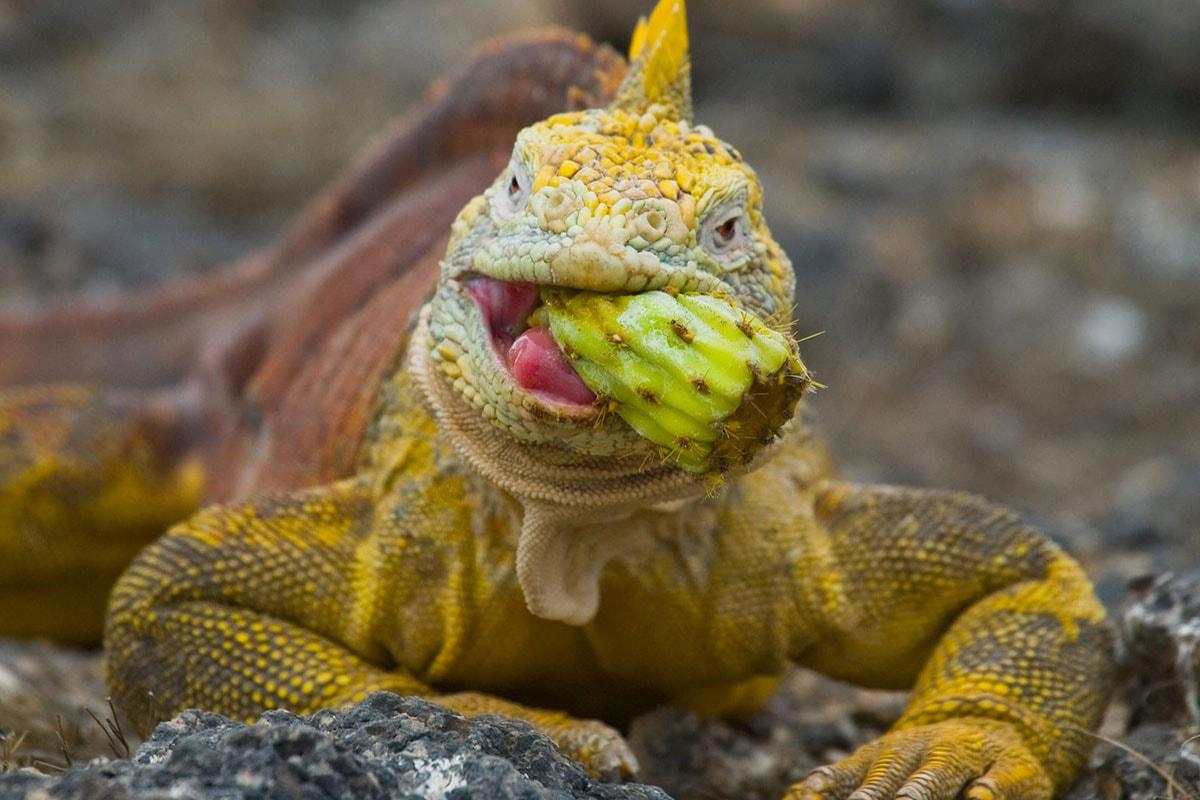 Wildlife Galapagos eilanden