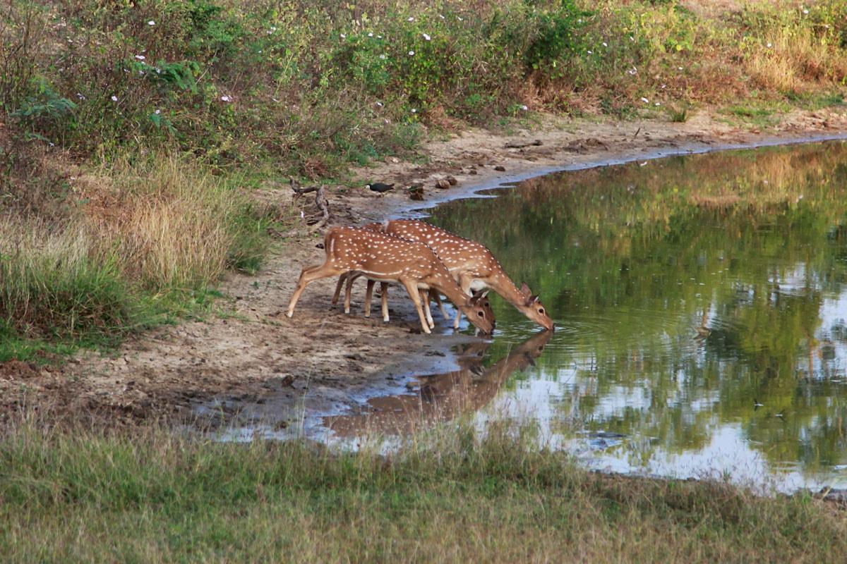 Dieren spotten in Yala Nationaal Park