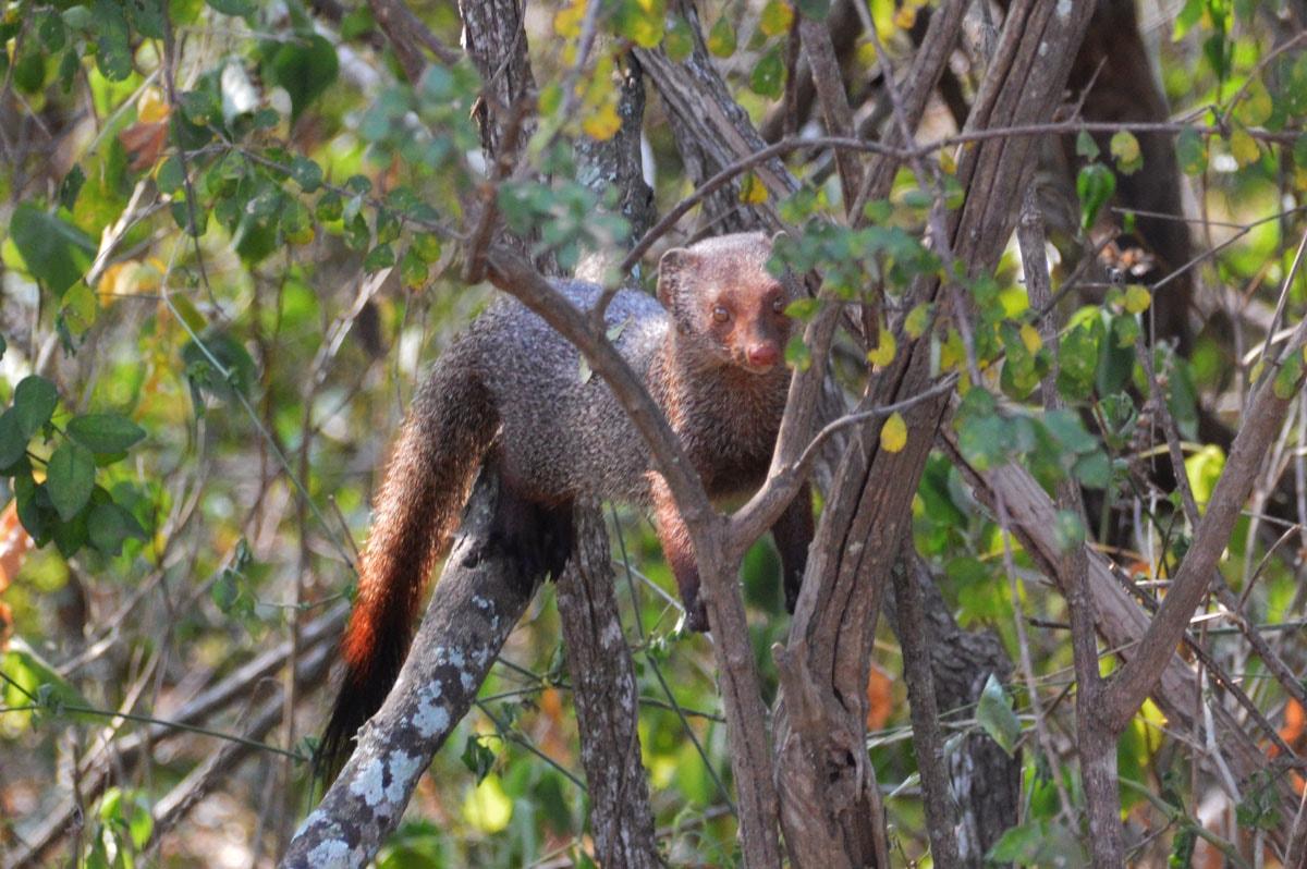 Dieren in Yala National Park