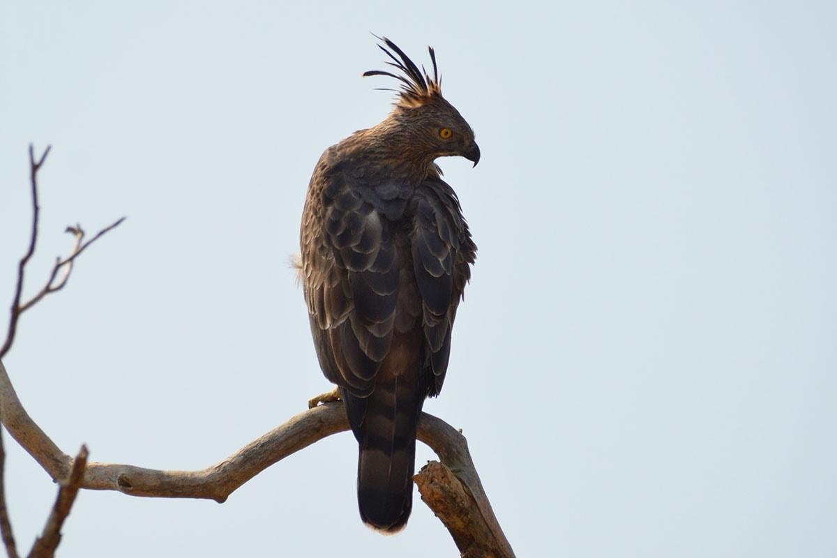 Birdwatching in Yala National Park