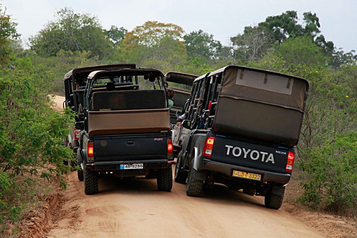 Yala National Park diervriendelijk
