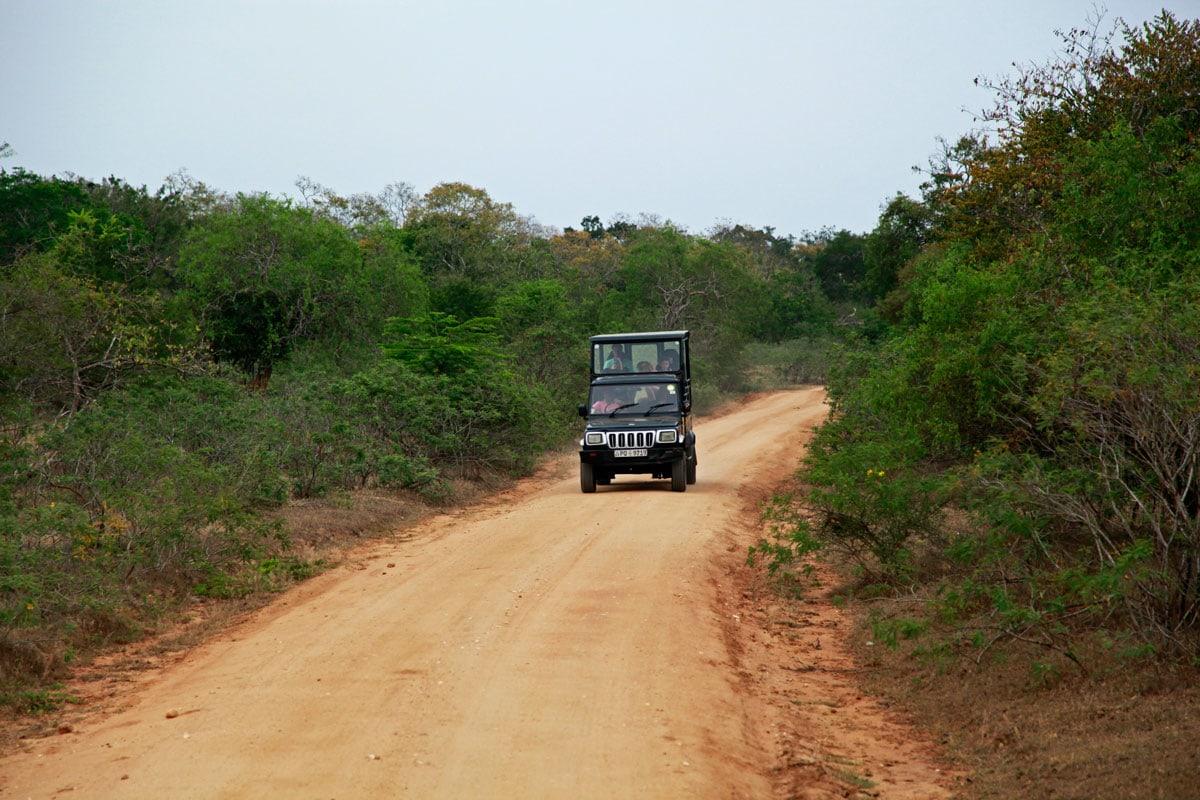 Jeep safari Yala National Park
