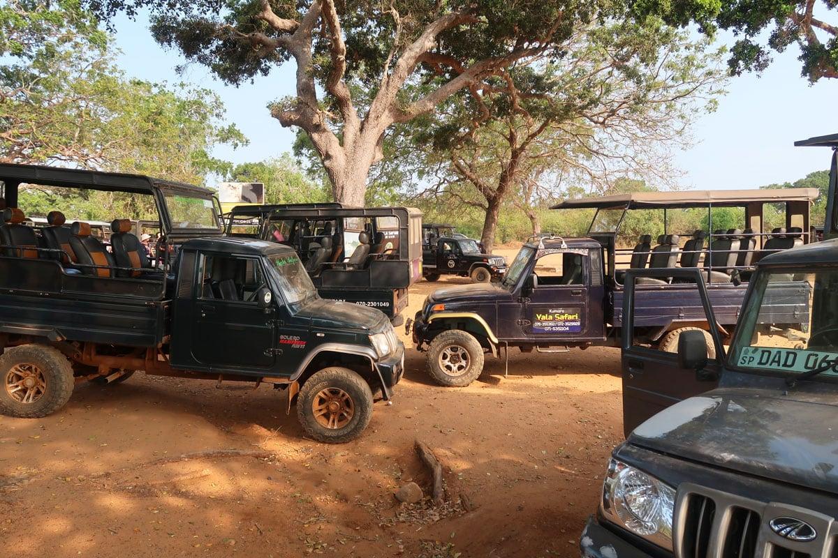 Wat kost een wildlife safari in Sri Lanka
