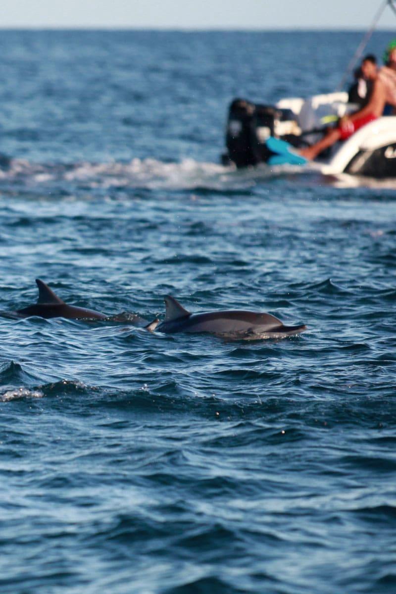 wat te doen op mauritius dolfijnen spotten
