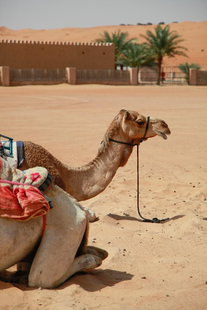 Kamelentocht Oman Wahiba Sands