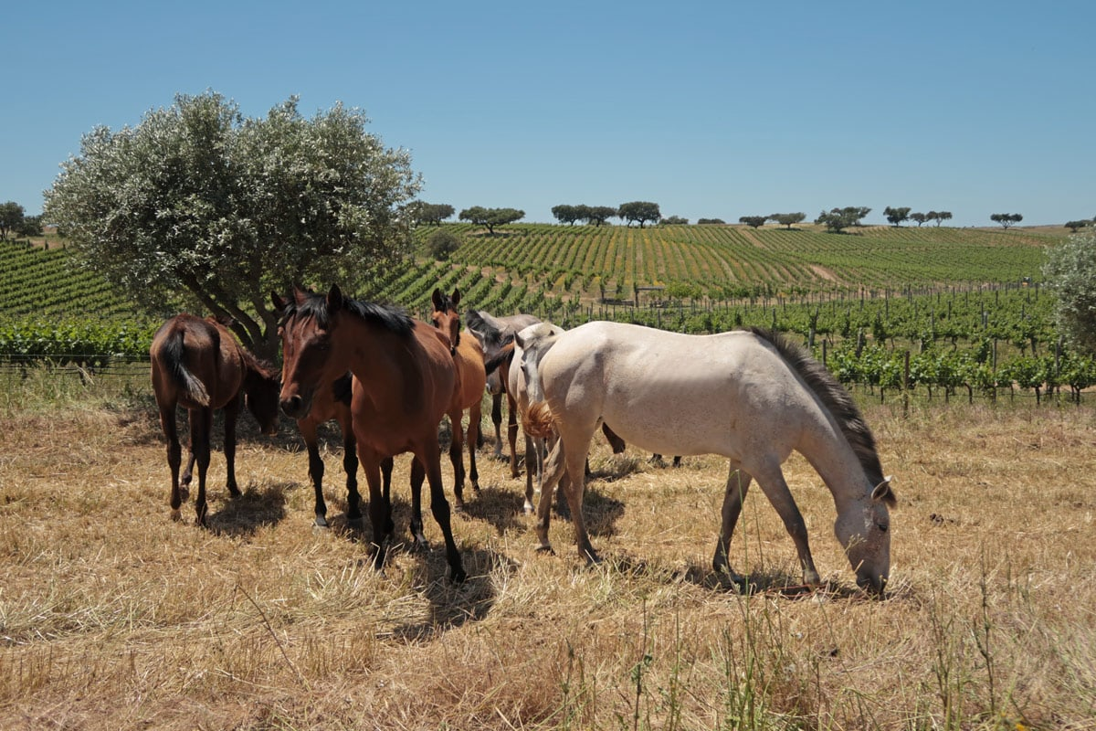 paardrijden in de alentejo