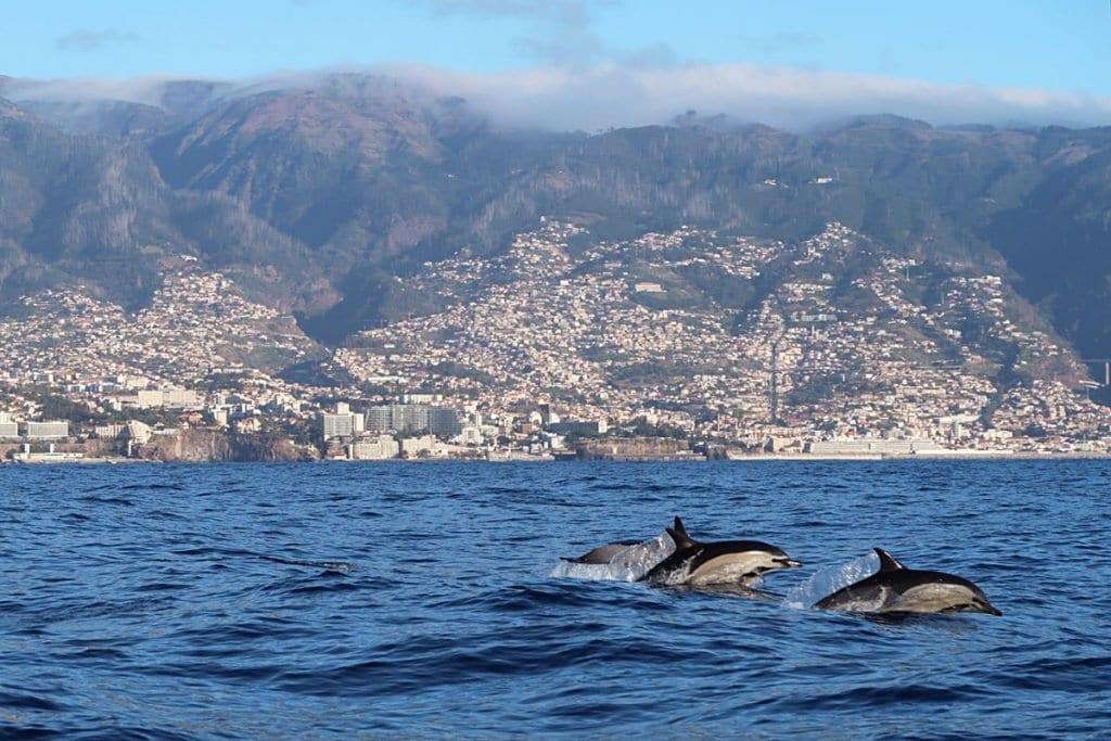 Wat te doen op Madeira walvissen en dolfijnen spotten
