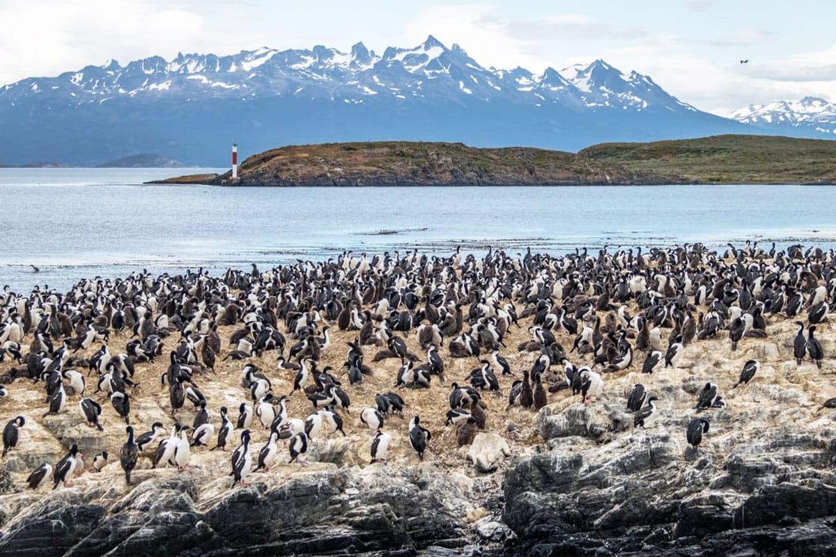 Patagonië wilde dieren pinguins