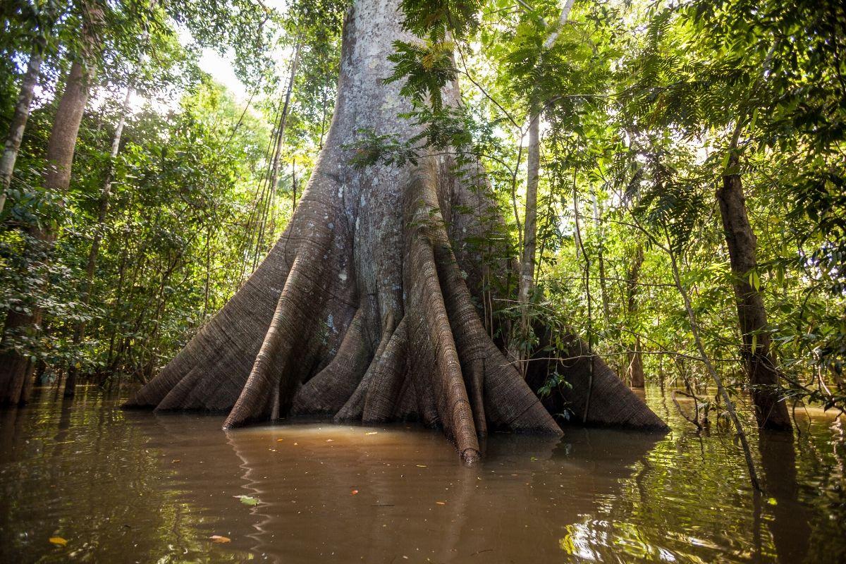 Boom in de Amazone