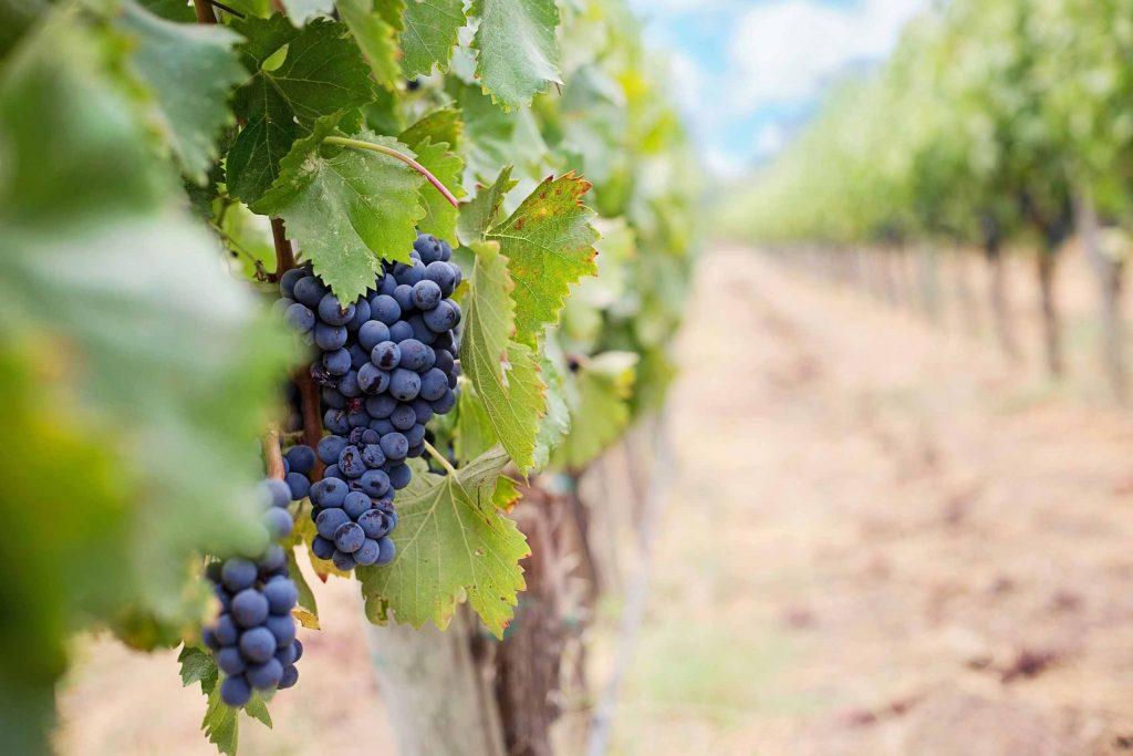 Mooiste wijngebieden in Duitsland