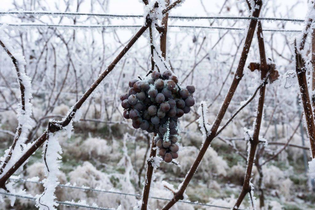 Mooie wijngebieden in Duitsland Baden Duitse wijnstreken