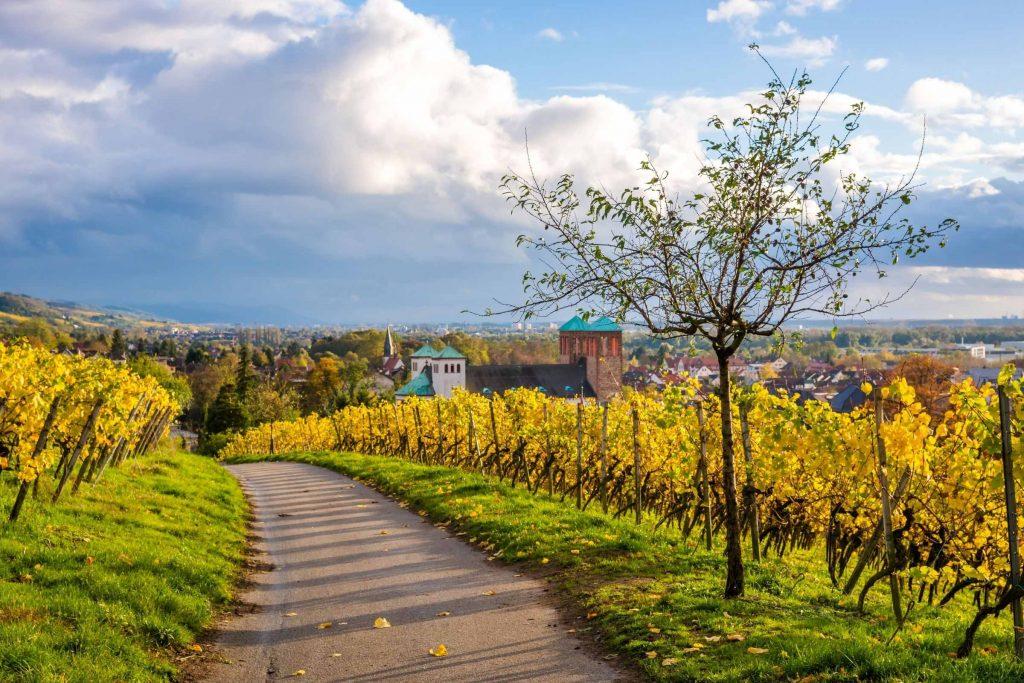 Wijngebied Hessische Bergstrasse in Duitsland